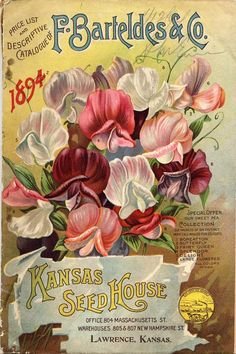 Gardeners love their seed catalogs. They are the botanical equivalent of a dream book—a grower's wishlist. This brief overview takes us through the history of seed and nursery catalogs and how they have evolved over the years. Garden Catalogs, Seed Catalogs, Cow Canvas, Canvas Art, Seed Art, Catalog Printing, Standard Image, Vintage Circus, Vintage Labels