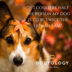 If I could be half the person my dog is, I'd be twice the human I am #Dogtology #Dogs #Pets