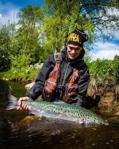 "166 Likes, 6 Comments - Ted Logardt (@tedlogardt) on Instagram: ""The newcomer... #atlanticsalmon #balticsalmon #swedishlapland #laxfiske #flugfiske #flyfishing…"""