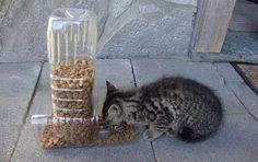 Mangeoire pour chat avec récupération de bouteilles plastiques