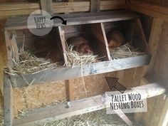 Cute DIY pallet wood nesting boxes for the chicken coop!