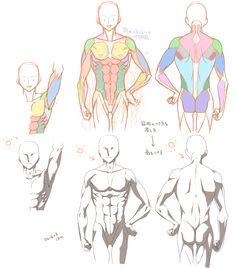 上半身の筋肉イラレポ|Palmie(パルミー)