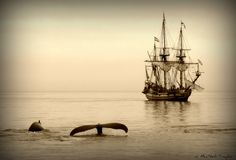 Tall ship and humpback whales off Cape Cod.