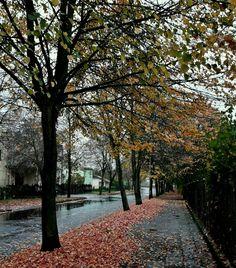 Jesień na ulicy w deszczu.