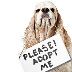 sign the pledge  Pledge to do anything you can to help homeless dogs.