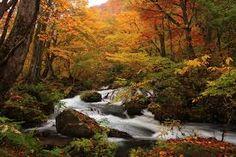visit Hokkaido, Japan in autumn