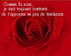 Comme la rose, je suis toujours contente de t'apporter un peu de tendresse.