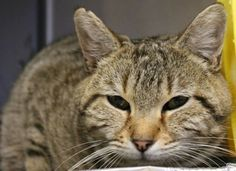Opt to Adopt:  Meet Mark Cat and Find Love - Greer, SC