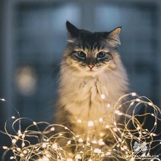 Purrfect Catphotos To Brighten Your Day ; purrfect catphotos, zum ihres tages zu erhellen Purrfect Catphotos To Brighten Your Day ; Pretty Cats, Beautiful Cats, Animals Beautiful, Cute Animals, Animals Dog, I Love Cats, Crazy Cats, Cute Cats, Funny Cats