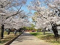 Nagasaki Peace Park... I really want to go there during the cherry blossom festival season.