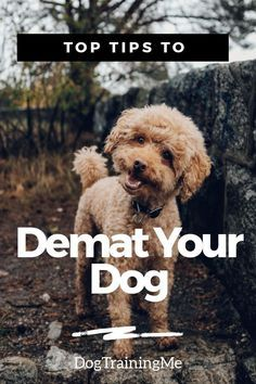 Is Matted Dog Hair Driving You Crazy Matted Dog Hair Can Be A Real Problem For Your Pup And Leads To Ongoing Health Problems Dog Hair Matted Dog Hair Dog Care