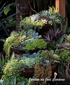 roof garden cascading succulent - Google Search