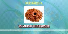 13 mukhi Rudraksh by Astrologer Rahul Kaushal  --------------------------------------------------------- It has 13 lines on it and is symbol of God Indra. It fulfills every desire and increases wealth too. It provides honor and gives respect in society. It provides money to childless and poor people. It is very effective and beneficial to those who wear it. It gives strength to get husband or wife of own choice http://www.pandit.com/13-mukhi-rudraksh/