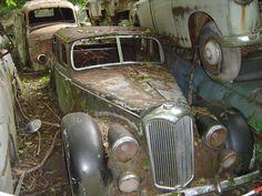 Sleeping beauties : Kaufdorf car junkyard, near Bern, Switzerland