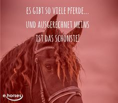 http://blog.ehorses.de/ #ehorses_official #ehorses_blog