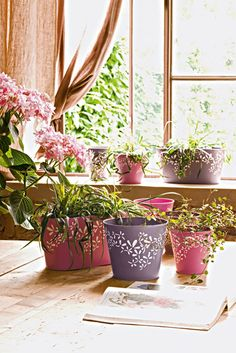 Naturaleza en casa on pinterest plants ideas para and for Ideas para decorar interiores con plantas
