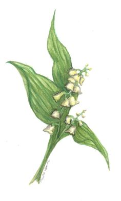 Lily of the Valley Watercolor ACEO Print by SentimentalByNature