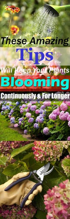 These Amazing Gardening Tips Will Keep Your Plants Blooming Continuously And For Longer