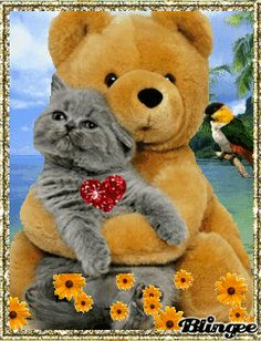 Urlaubsliebe Cute Cats And Kittens, Cool Cats, Kittens Cutest, Big Emoji, Teddy Bear Cartoon, Happy Anniversary Wishes, Emoji Symbols, Happy Friendship Day, Bear Wallpaper