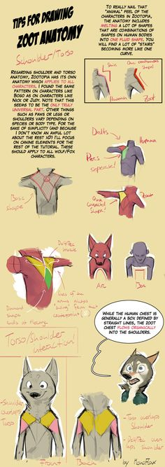 Tips for Zoot Anthro Anatomy - Shoulders and Torso by MonoFlax  #animal #anthro #tutorial #zootopia  Of course, most of these tips are basically from Cory Loftis, but I am rather pleased with how it turned out!   Lemme know if this is helpful or not, I might do another one for legs, arms and paws.    And please, don't draw humans with animal heads anymore. It can be so much cooler than that