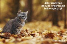 Nierasowe #koty z rodowodem