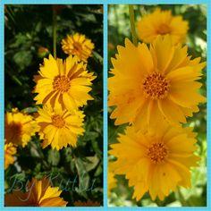Çiçekleri çok seviyorum 😉 💙  #çiçek #bahçemiz #bahçemizden