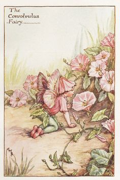 Flower Fairies: THE CONVOLVULUS FAIRY Vintage Print c1930 by Cicely Mary Barker
