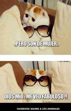 Gatito gracioso funny / divertido /gracioso
