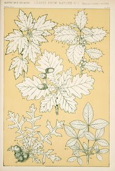 Jones, Owen, 1809-1874. / The grammar of ornament(1910)[Leaves and flowers…