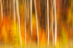 Abstract Fall Forest, Cuyahoga Valley National Park, Ohio