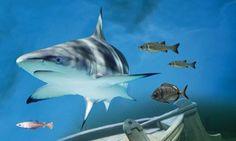 Groupon - Zwemmen met haaien bij Deltapark Neeltje Jans voor 1 of 2 personen (vanaf € 26,99) in Burgh-Haamstede. Groupon-dealprijs: €26,99
