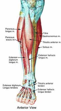 lower legs pain                                                                                                                                                     Más