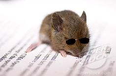 One of the three blind mice...  :)