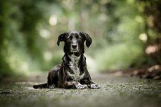 Hunde - Lars Grötzinger Fotografie