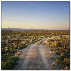 Droë Karoo Abstract Landscape, Landscape Paintings, Landscapes, Big Sky Country, Country Roads, Composition Art, Sheep Farm, Port Elizabeth, South Africa