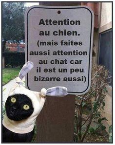 Attention au chien, mais faites aussi attention au chat ...
