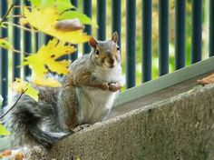 May I Have a Nut, Please? Photo by Rus Bowden -- National Geographic Your Shot