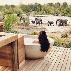 Debo reconocer que una de los momentos que más me atraen de una boda es la luna de miel ✈️ Fotografía: Londolozi Game Reserve.
