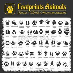 Следы животных - североамериканских животных — стоковая иллюстрация #110762624