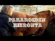 Tiesitkö, että notkoselkäisellä hevosella on jatkuvasti jännittyneet pakarat? Tällöin hevosen takaosa ei toimi moottorina, kuten pitäisi. Katso videolta, miten saada pehmitettyä hevosen kireitä pakaroita, jotta oikein ratsastaminen olisi hevoselle kivuttomampaa ja helpompaa!    http://impulsoblogi.blogspot.com/2016/12/shiatsu-hevoshierontaa-videolla-osa-3.html?spref=fb    Hevosshiatsu, hevoshieronta, hevoshieroja, Tampere, Jämsä