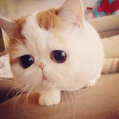 cutest cat!