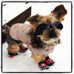 Brrrrr.....it's cold, but glad I'm ready for the snow.  Boots....check!  Coat......check!  Doggles......check!  #yorkie #snow #cold