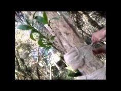 Novo modelo de vaso para fixar orquídeas em árvores - YouTube