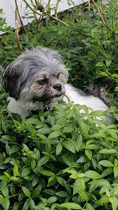Arja hiding inn the flower bed 😊