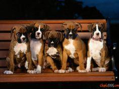 Types de photo de chien