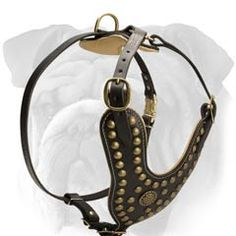 Exclusive Design Studded Leather Harness for English Bulldog