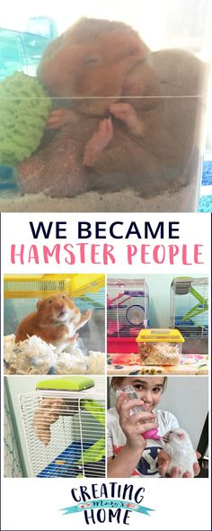 We are officially Hamster People: How it happened to us & our favorite hamster products - creatingmaryshome.com