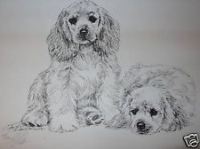 American Cocker Spaniel Puppies By Lyn St.Clair