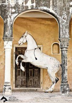 www.pegasebuzz.com | Equestrian photography : Melissa Bücheler 2016.