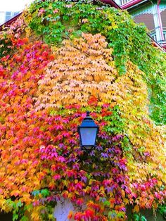 adoru11: our-amazing-world: Most Colorful Wall, Amazing World グラデーション https://www.youtube.com/channel/UC76YOQIJa6Gej0_FuhRQxJg